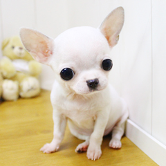 """<font style=""""font-size:13px; font-weight:bold;"""">Chihuahua</font> <font style=""""font-size:12px; color:#c9c9c9;"""">l margarine</font>"""