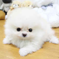 """<font style=""""font-size:13px; font-weight:bold;"""">Pomeranian</font> <font style=""""font-size:12px; color:#c9c9c9;"""">l drink</font>"""