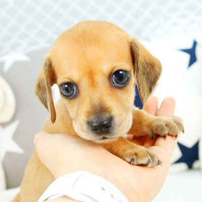 """<font style=""""font-size:13px; font-weight:bold;"""">dachshund</font> <font style=""""font-size:12px; color:#c9c9c9;"""">l skein</font>"""